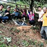 Bảo tồn cây chè cổ thụ tại vùng chè Cao Bồ, tỉnh Hà Giang